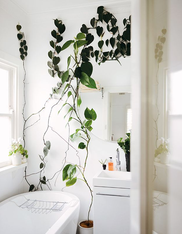 Find The Perfect Houseplant For Your Home Indoor