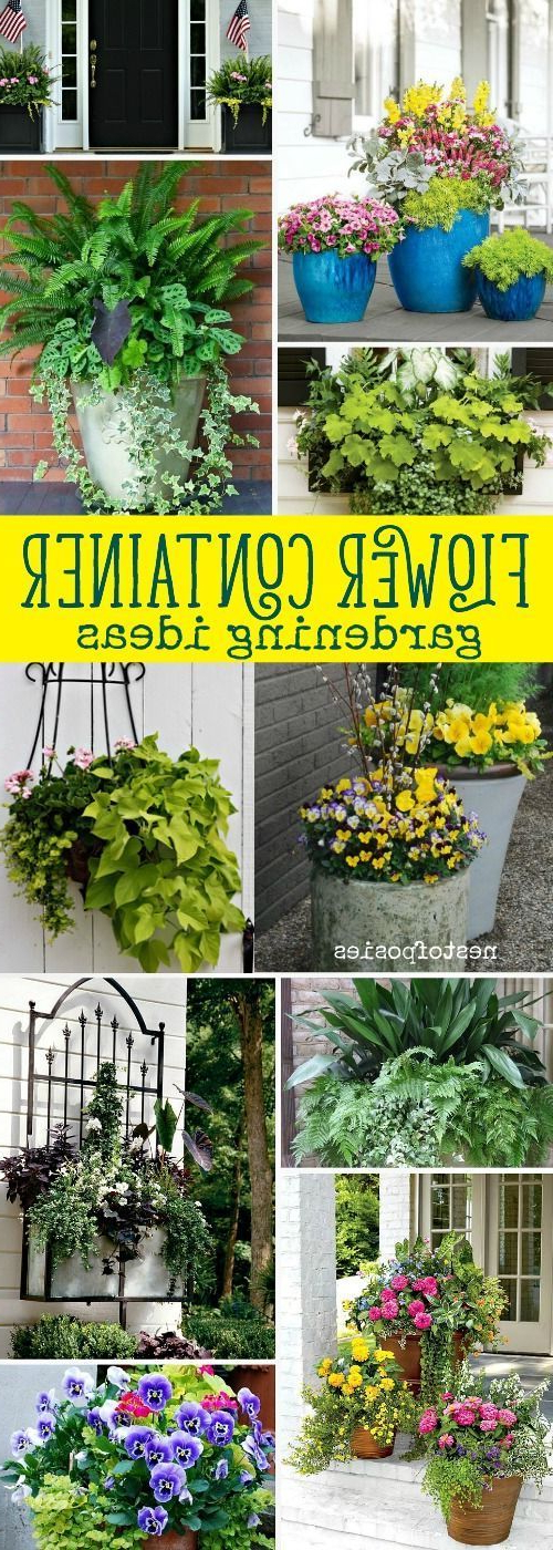 Flower Container Gardening Ideas Container Flowers
