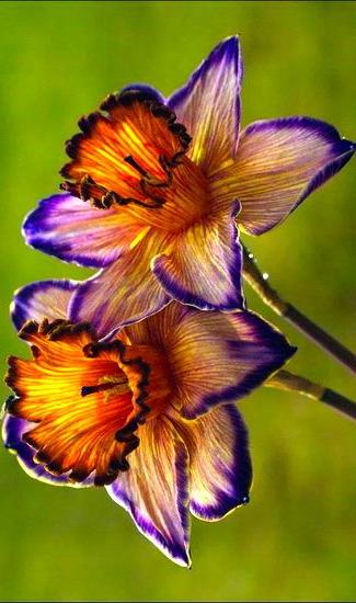 Flower Inspiration Bevonboch Unusual Flowers Rare