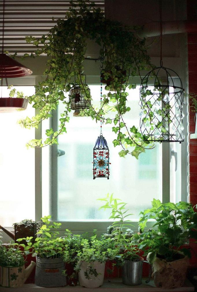 Hanging Plants In Bathroom Herbs On Windowsill In Kitchen