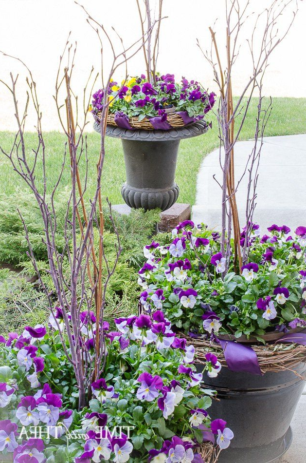 How To Create A Gorgeous Pansy Outdoor Planter In Four