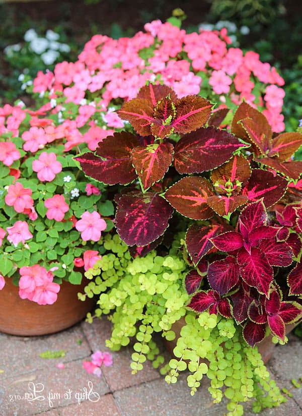 How To Plant Beautiful Container Gardens Skip To My Lou
