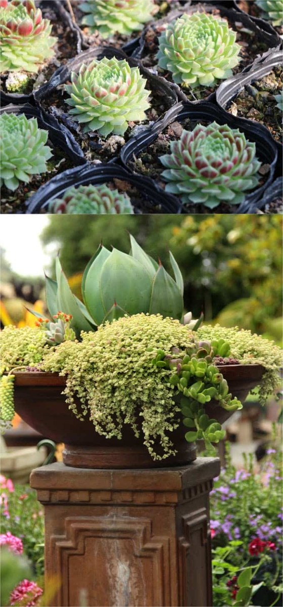 How To Plant Beautiful Succulent Gardens In 5 Easy Steps