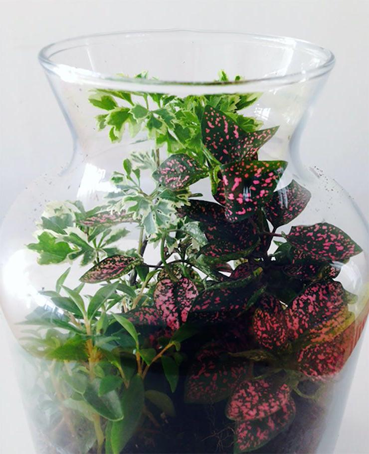 How To Terrariums Terrarium Plants Plants Terrarium