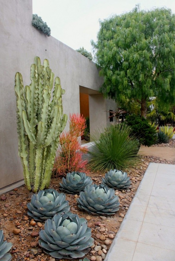 How To Use Cacti In Outdoor Decor Outdoortheme