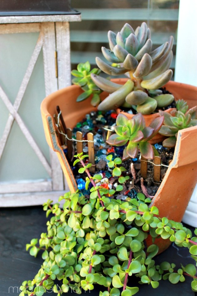 Ideas For Planting Succulents The Graphics Fairy