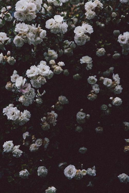 Noelito Flow Flower Aesthetic Nature Plants