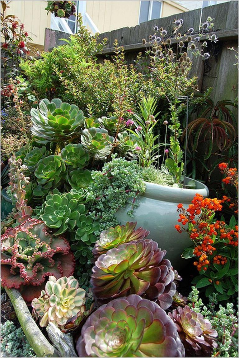 Picturesque Cactus Garden Ideas