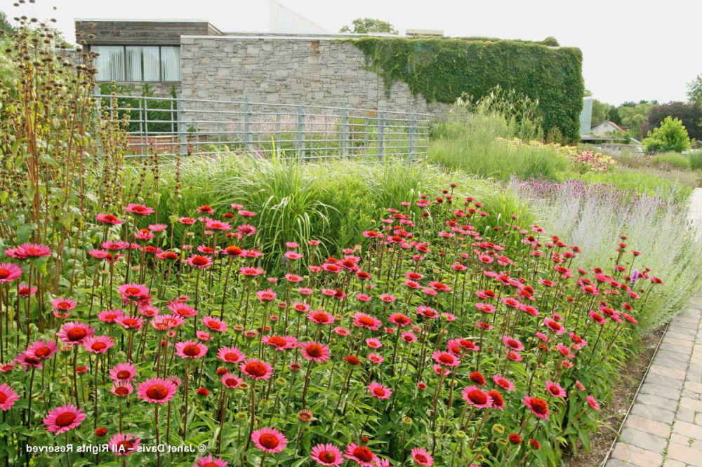 Piet Oudolf Meadow Maker Part One Botanical Gardens