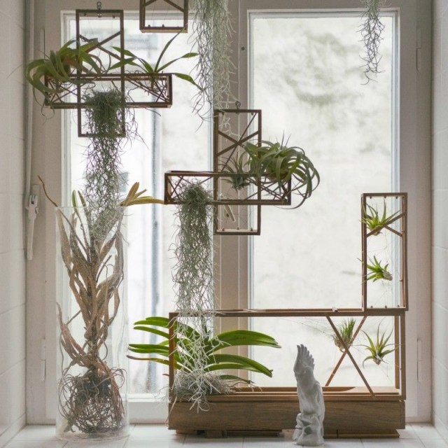 Plant In City Air Terrarium Plants Interior Plants Air