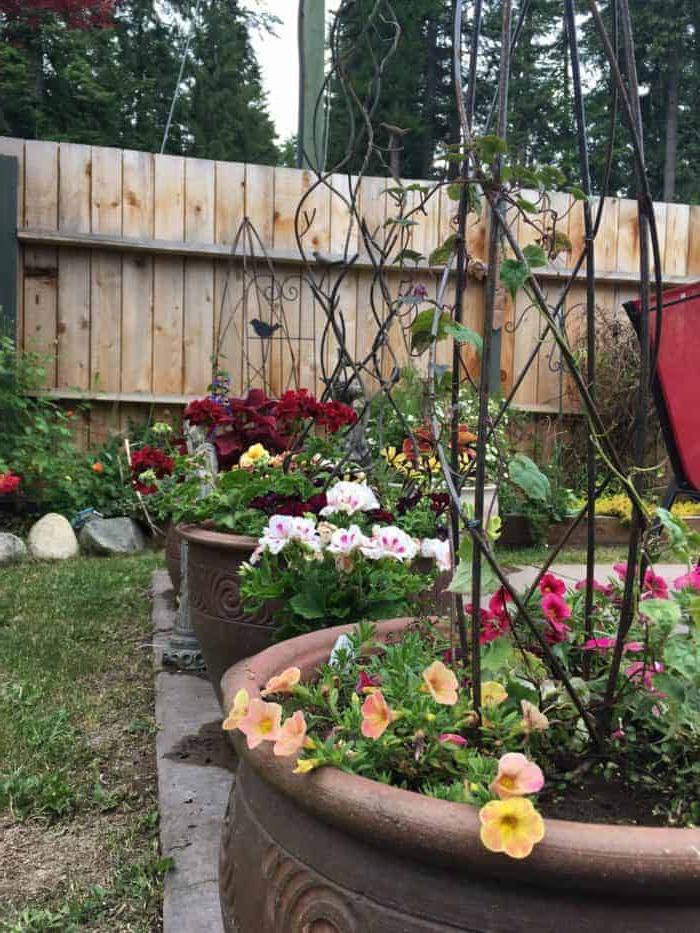 Small Backyard Garden Ideas Tips Family Food Garden