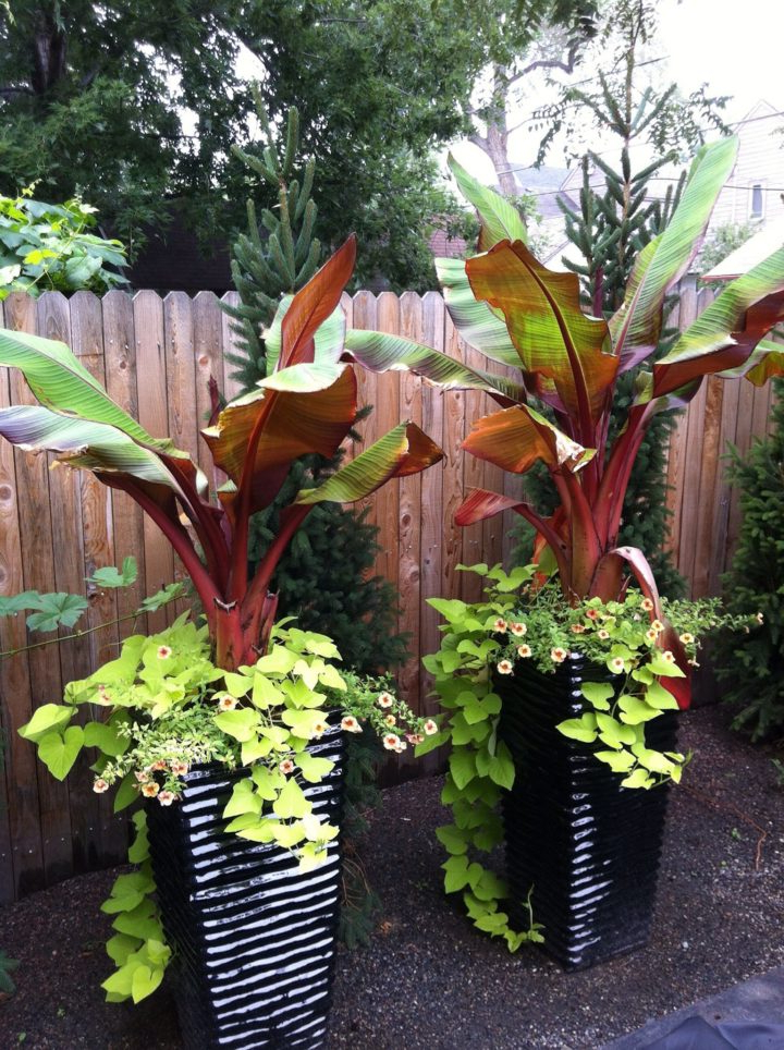 Small Front Yard Tropical Landscaping Ideas Small Front ... on Tropical Landscaping Ideas For Small Yards id=51859