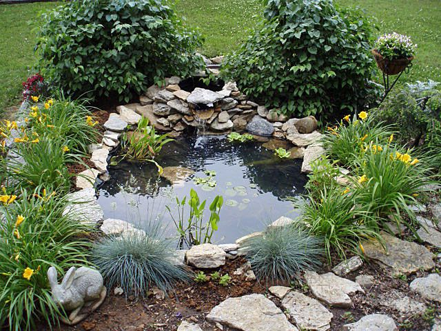 Small Pond In Front Yard Since We Kill Bushes And Plants