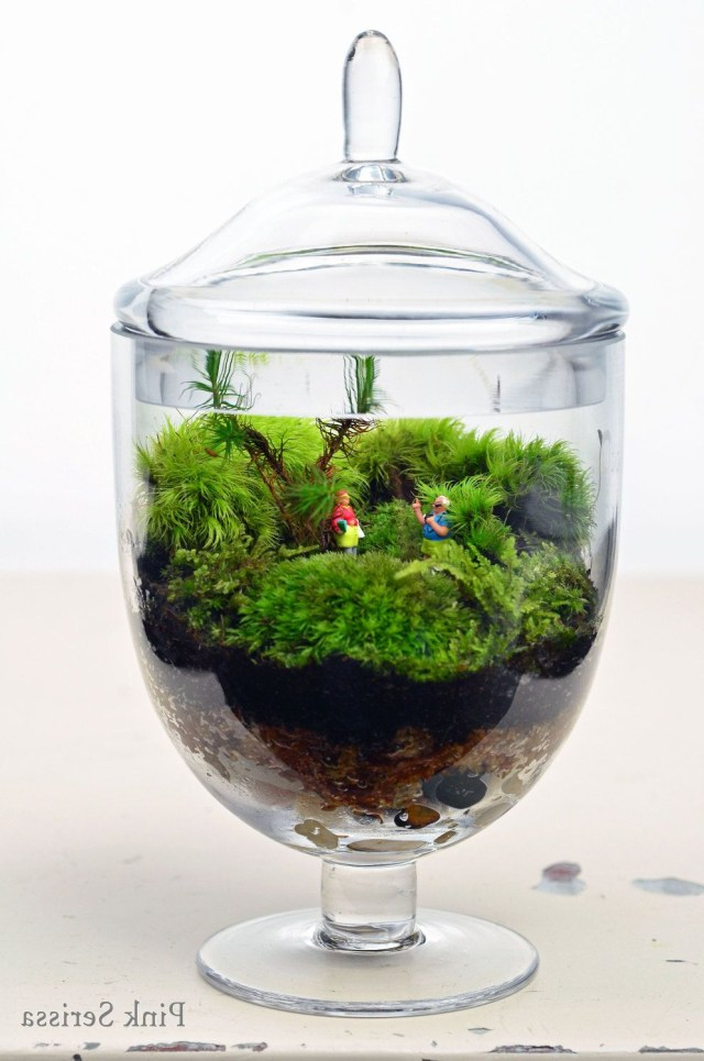 Terrarium Live Moss Little People Glass