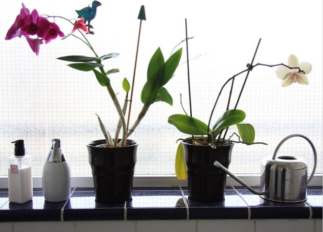 The 10 Best Plants For Your Bathroom Plants That Thrive