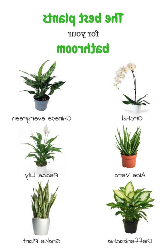 The Best Plants For Your Bathroom Plants Indoor Plants