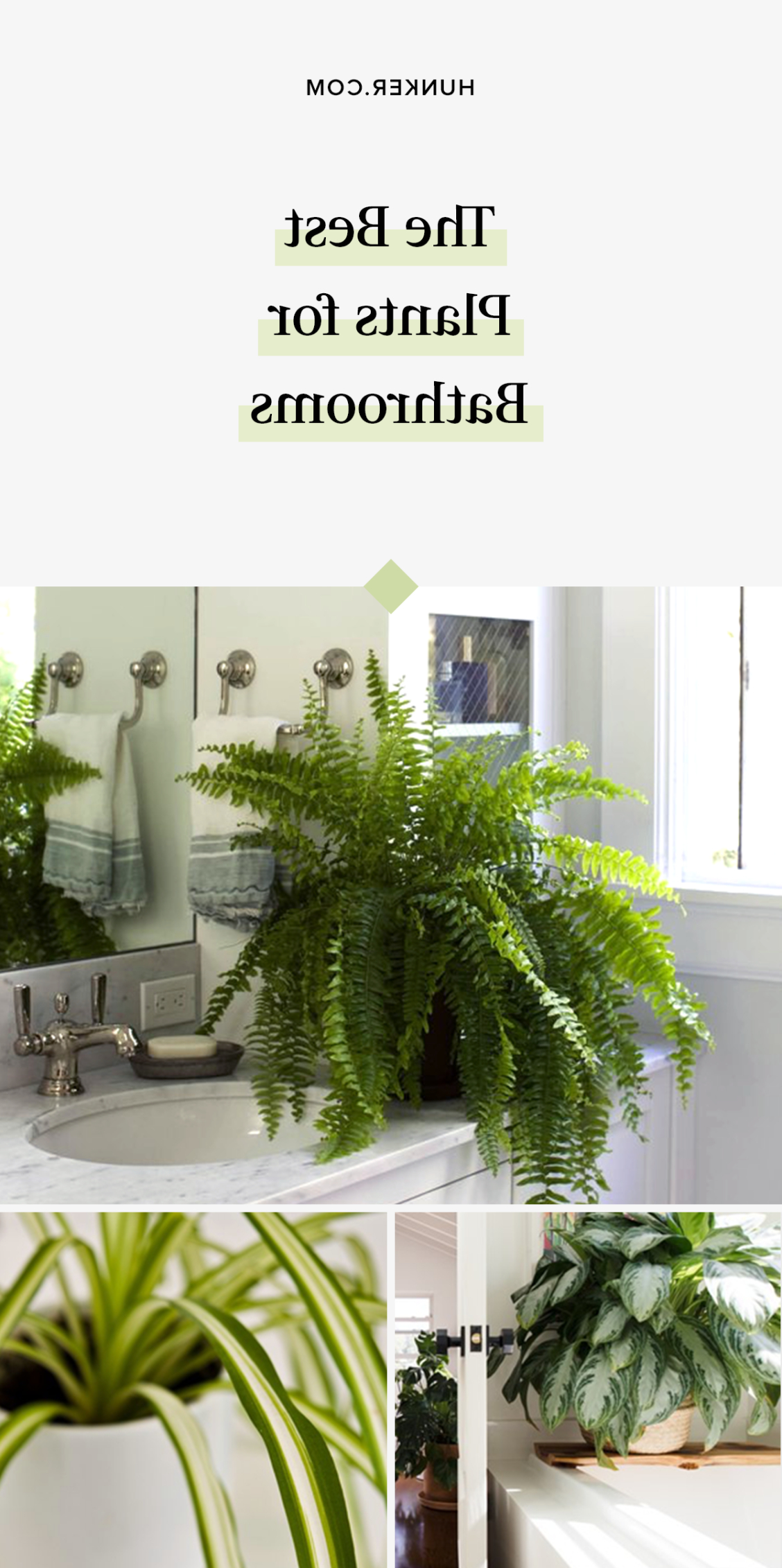 These 6 Plants Are Best For Bathrooms Plants Bathroom