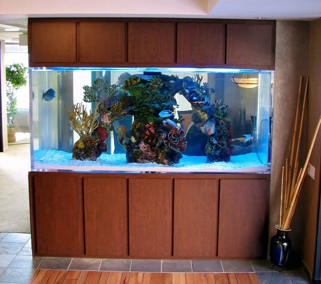 This Is A 500 Gallon Custom Aquarium Its Viewable From