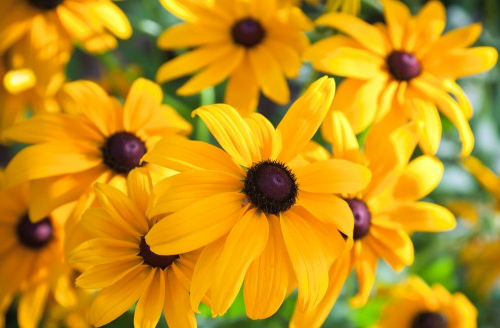 Top 25 Most Beautiful Yellow Flowers Herinterest