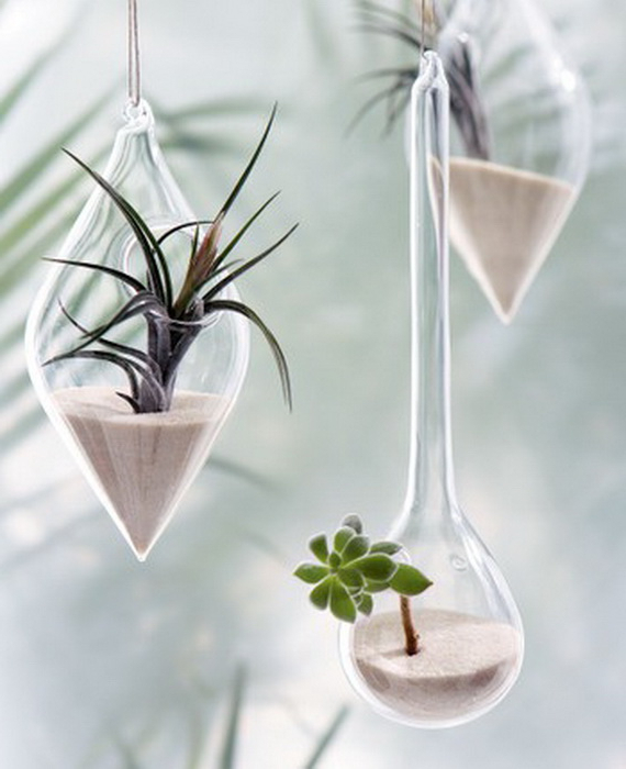 Unusual Air Plants Home Decoration Inspiration Ideas And