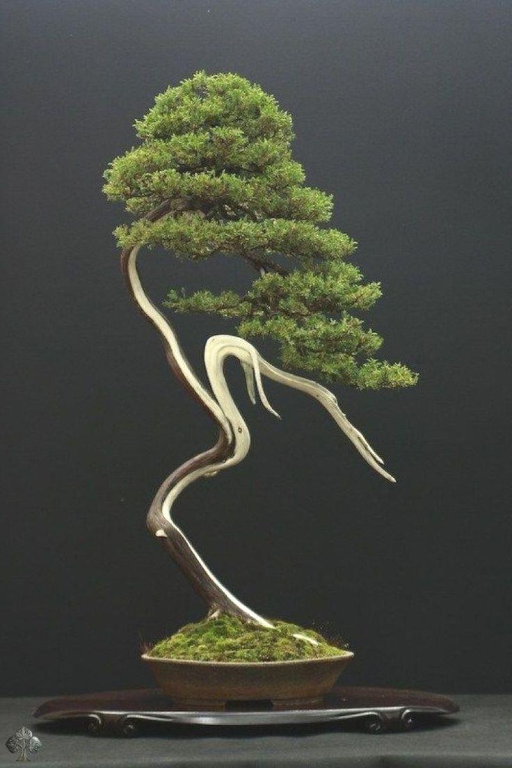 Your Bonsai Inspiration For Today Bonsaiinspiration