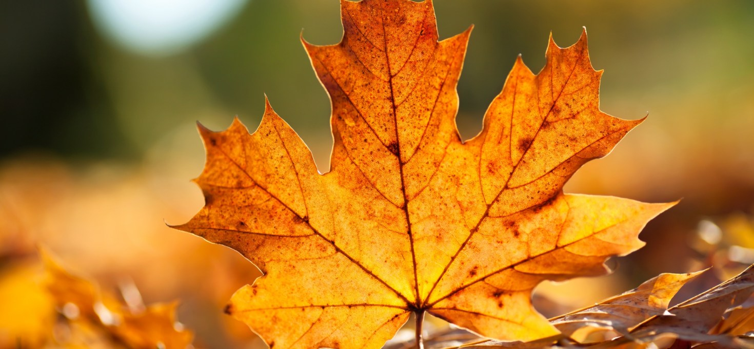 Mulching Your Garden with Fallen Leaves