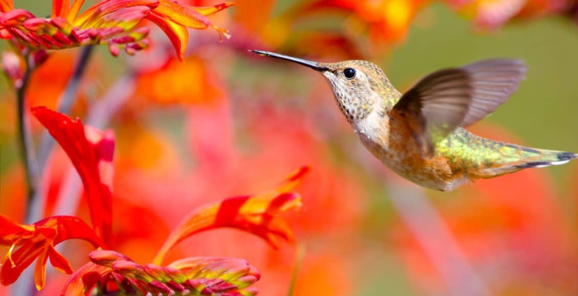 How To Attract Hummingbirds To Your Yard Home Garden And Homestead