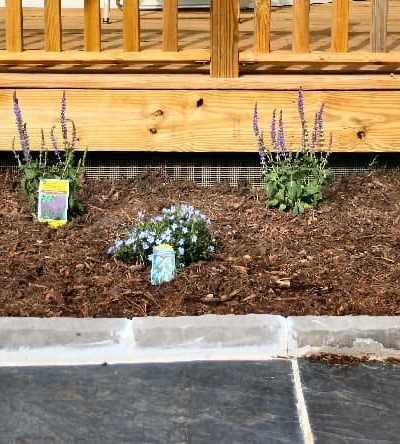 perennials as foundation plants