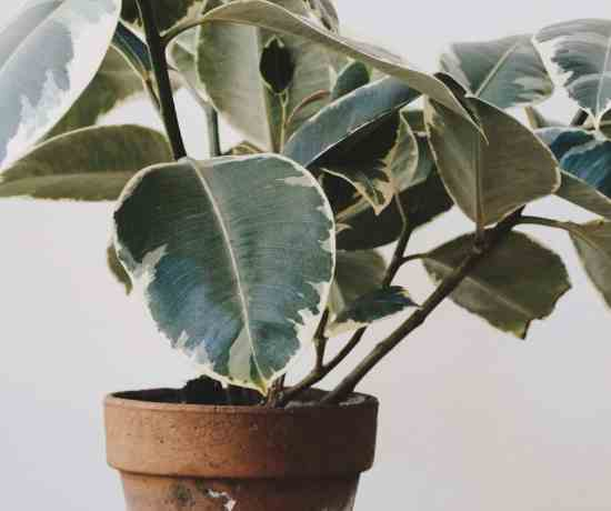 light requirement for house plant