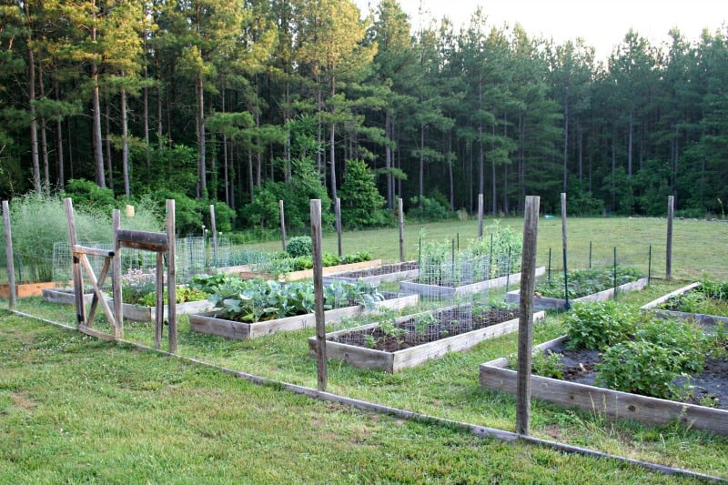 Is pressure treated wood ok for raised garden beds - Pressure treated wood for garden beds ...