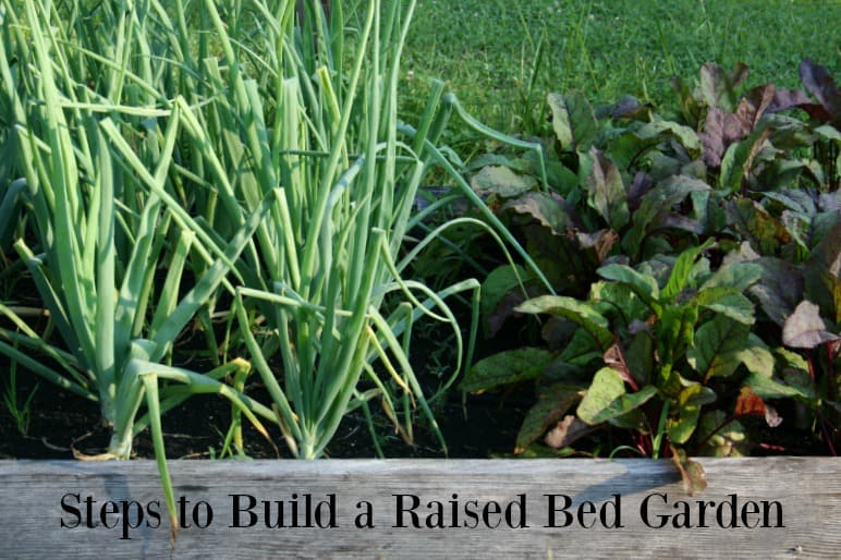 Steps To Build A Raised Vegetable Garden Bed