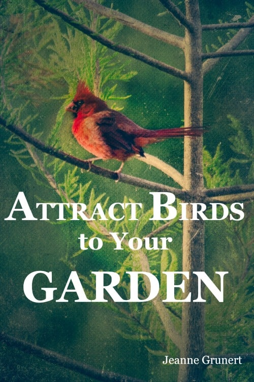 book cover attract birds