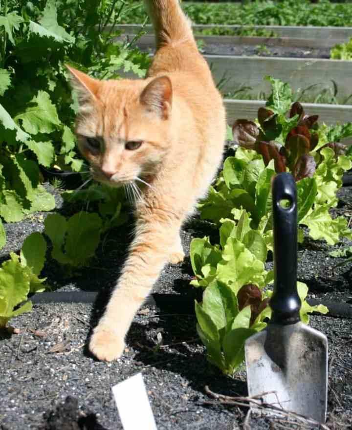 raz gardening
