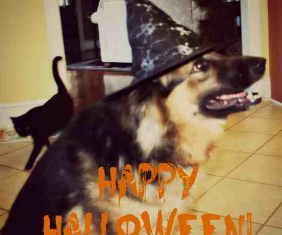 shadow and genghis halloween