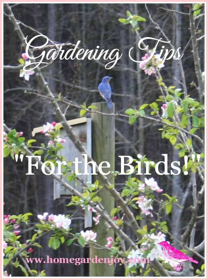 Garden Landscaping Ideas: Create a Backyard Bird Sanctuary ... on Birds Backyard Landscapes id=84562