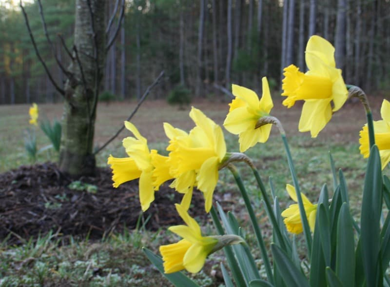 Keep Squirrels Away From Bulbs Squirrel And Deer Proof Your Tulip