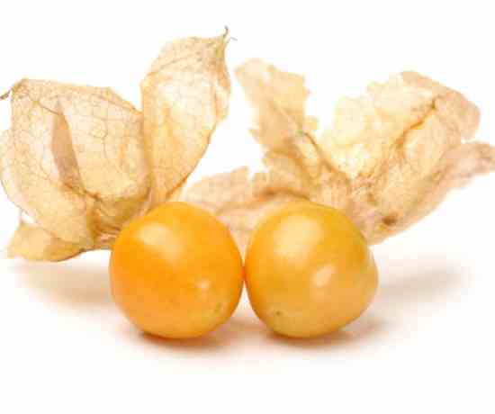 closeup picture of ground cherries