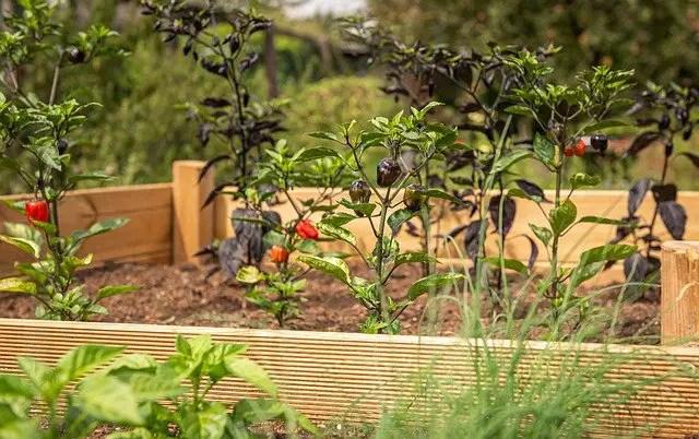 best soil mixture for a raised vegetable garden