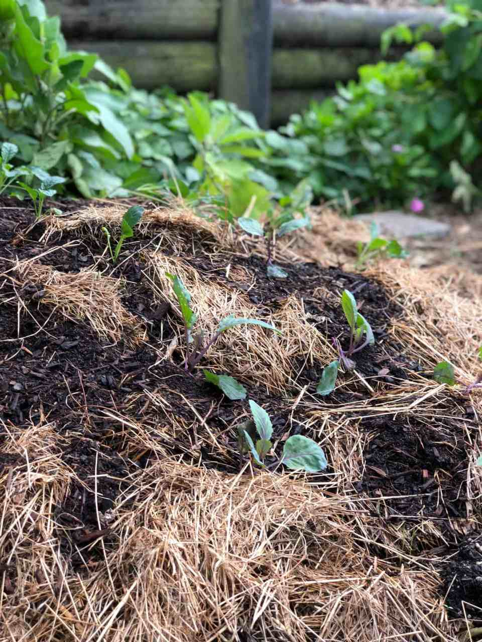 Building Soil Over Winter- No dig garden beds