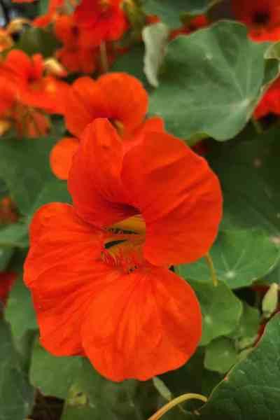 Flowers in the Garden- Beneficial Blooms