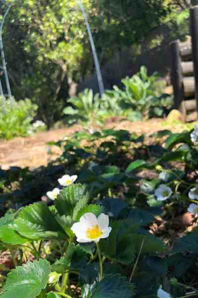 Spring in the Garden-November to do list