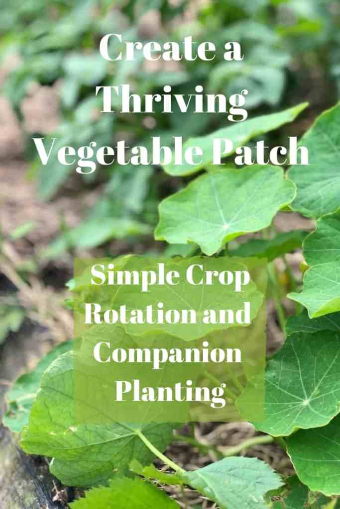 Companion Planting and Crop Rotation