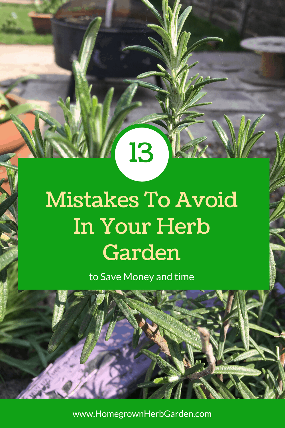 13 mistakes to avoid in your herb garden
