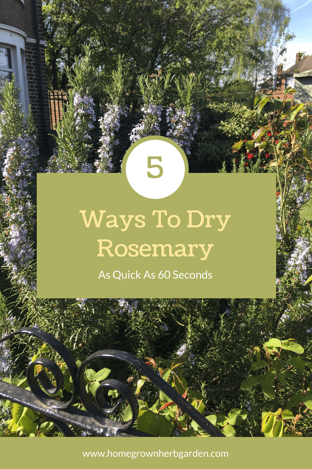 How to dry rosemary