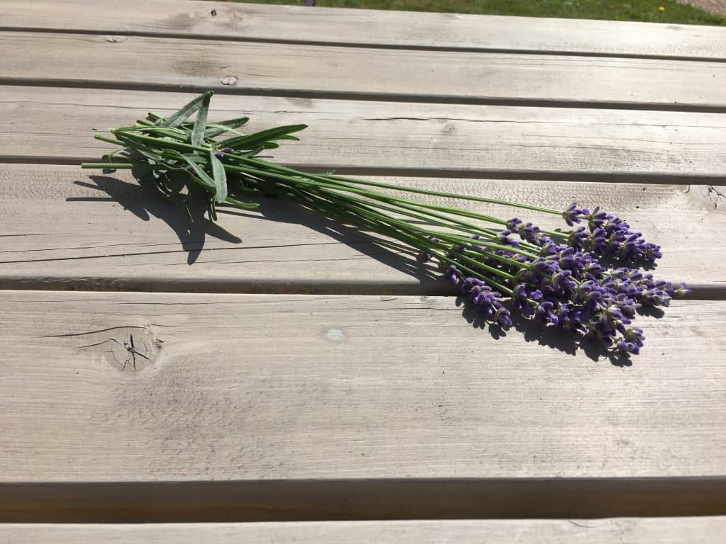 lavender cut on a wooden bench