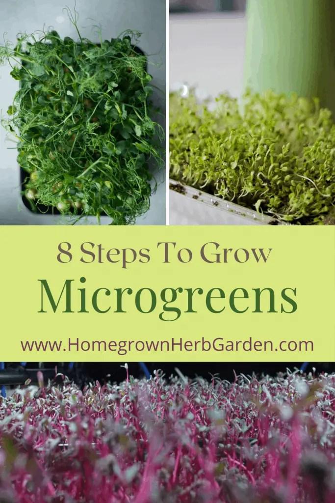 Micro herbs Pin