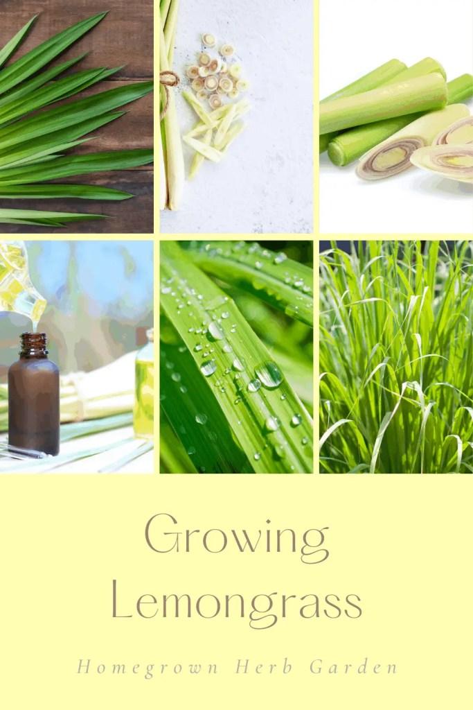 lemongrass pin