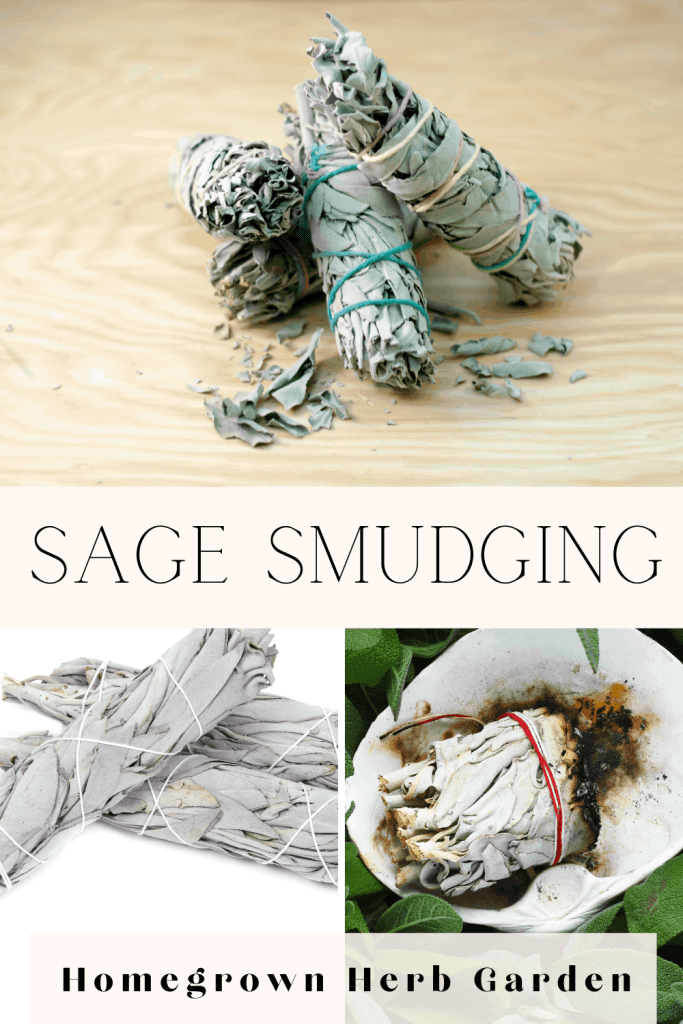 sage smudging for beginners a complete guide, from growing sage, to drying to blessings and how to cleanse your home.