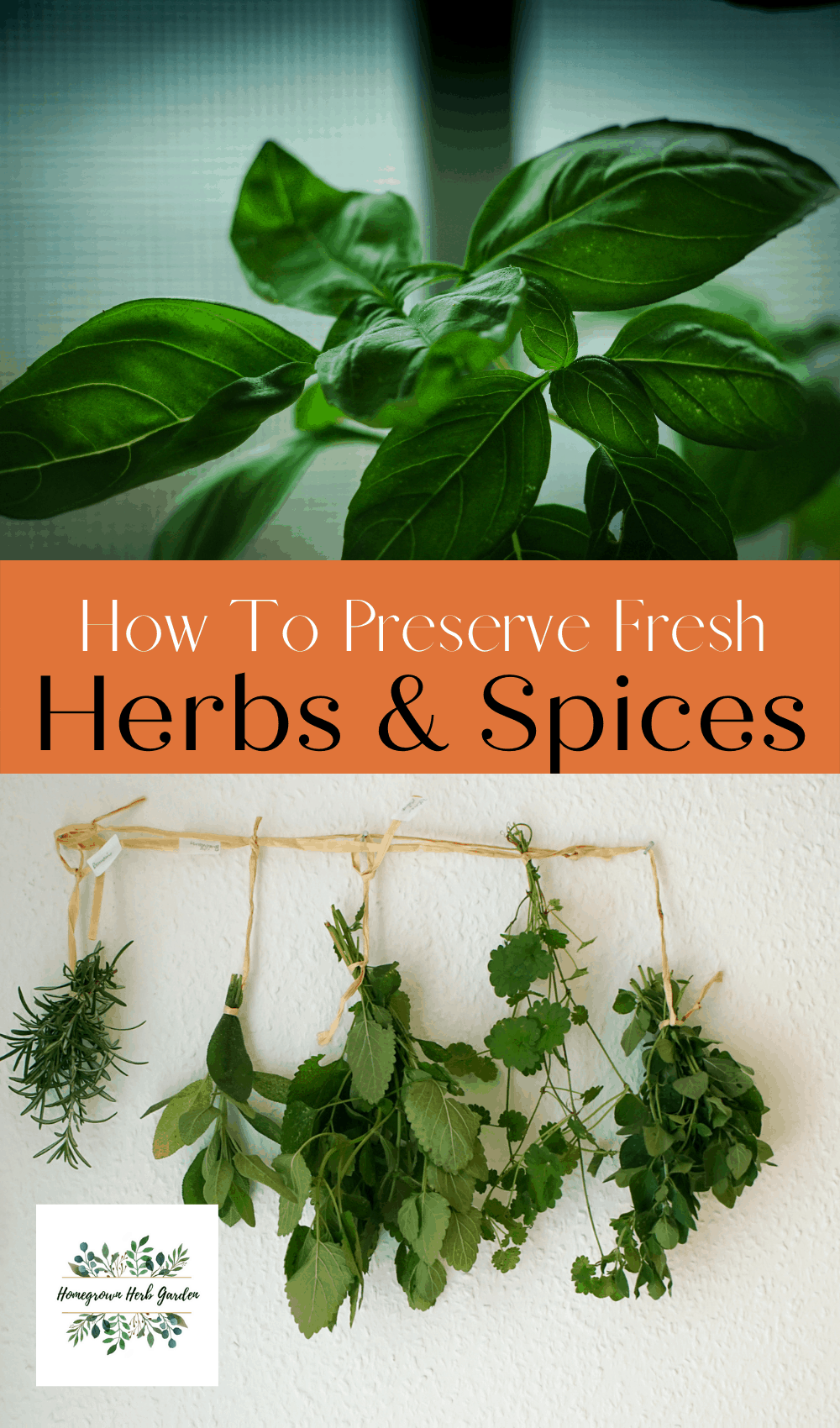 how to store and preserve fresh herbs