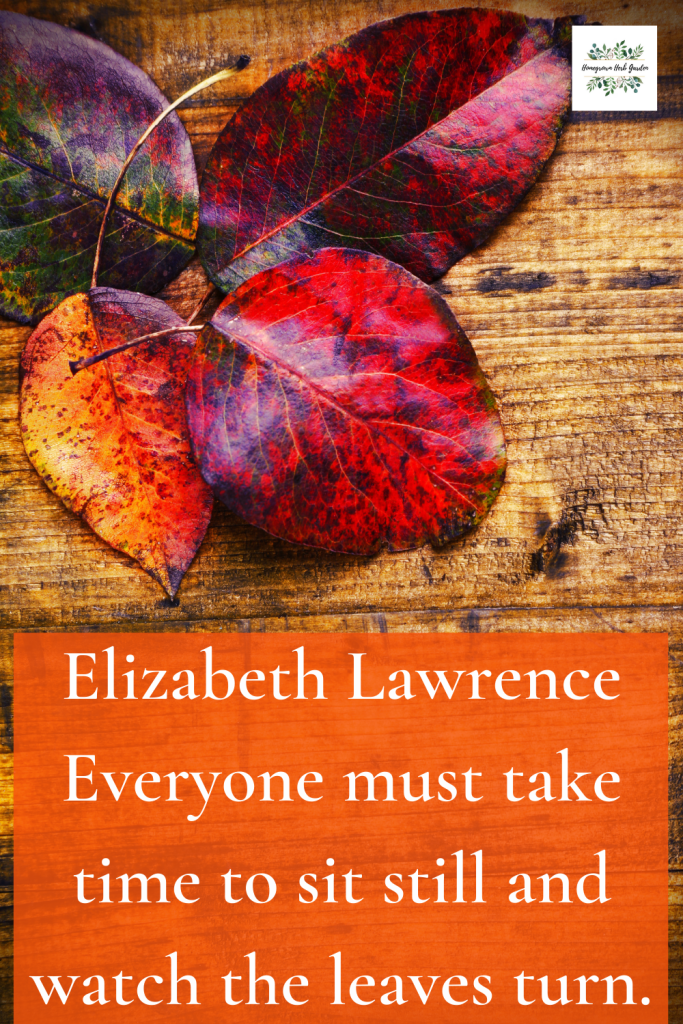 Elizabeth Lawrence Everyone must take time to sit still and watch the leaves turn.